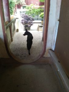 stray dog volunteer