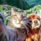 17 cutest animals of Peru