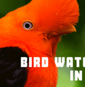 Bird Watching In Peru – 10 Surprise Birds, 10 missed birds & 10 common birds