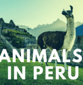 Must see animals in Peru