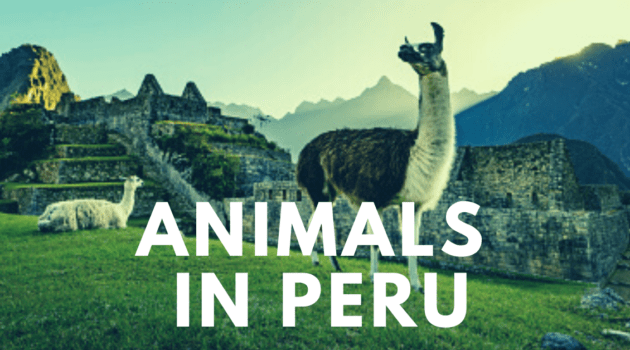 Must see animals in Peru