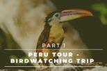 Peru Tour – Complete Birdwatching Trip Report | Lima, Lachay Hills, Wetlands of Ventanilla, Milloc | Part 1