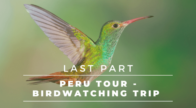 Peru Tour – Complete Birdwatching Trip Report –Nazca, Paracas National Park, Islas de las Ballestas | Last Part 6