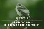 Peru Tour – Complete Birdwatching Trip Report – Lomas de Lachay, Pucusana, Puerto Viejo and Humedales de Ventanilla | Part 2